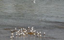 آورد آبهای خوزستان ۵۰ درصد سالهای نرمال است