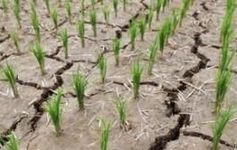 شدیدترین خشکسالی یک قرن اخیر در کره شمالی
