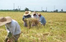 آبیاری مزارع خرمشهر با روشهای نوین