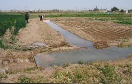 کمآبی به کشاورزی خوزستان ضربه زده است