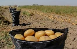 افزایش کشت محصول با نیاز آبی فراوان در خراسانشمالی!