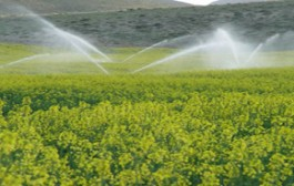 سهم آب شرب در جیب بخش کشاورزی / نقش کشاورزی در خشکسالی چقدر است؟