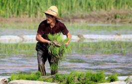 صرفهجویی ۳۰۰ میلیون مترمکعبی در آب کشاورزی گیلان