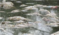 احیای دوباره رودخانه کشکان با استفاده از مدیریت صحیح مصرف