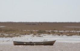 سیلاب سرعت احیای هامون را افزایش داد