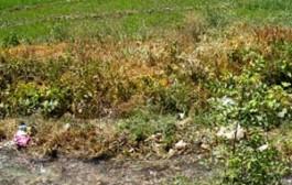 آبیاری اراضی ماهدشت با پساب تصفیه خانه