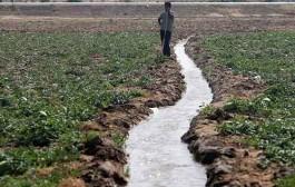 سهم کشاورزی از مصرف آب کمتر از ۸۰ درصد است