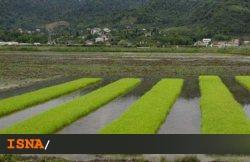 استفاده از آب شیرین در کشاورزی خطر بزرگی برای بروز کم آبی است
