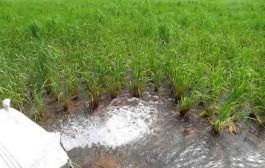 استفاده از پساب تصفیهخانه قم در بخش کشاورزی و صنعت ضروری است