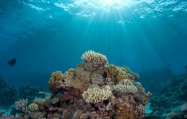 سیستم عظیم پاکسازی اقیانوسها