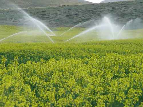 هشدار درباره خشکیدگی ۷۰ هزار نهال کاری