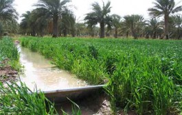 لزوم بهرهبرداری بیشتر از روان آبها در بخش کشاورزی سمنان