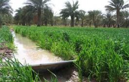 اجرای ۵۰۰ هکتار جنگل جایگزین در سد شفارود