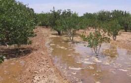 استفاده از آب شرب برای آبیاری باغها