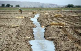 کشاورزی منهای آب مساوی با هیچ است