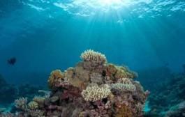 محققان شیوه نوین تشخیص سلامت آب های آزاد جهان را کشف کردند