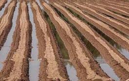امضای ۱۰۰ نماینده برای طرح «آببها را از کشاورزان نگیریم»