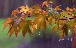 متوسط بارندگی استان مرکزی به ۵۳ میلیمتر رسید