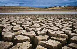 پیامد جبرانناپذیر خشکسالی بر درختان