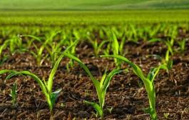 آب رسانی روستایی مهمترین اولویت وزارت نیرو در سال جدید