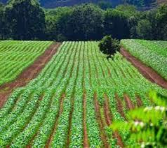 بهرهوری آب کشاورزی در استان البرز با کشورهای اروپایی برابر است