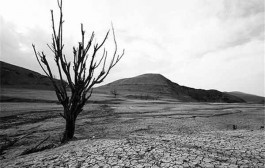 آب، مهمترین مساله در توسعه استان کرمان