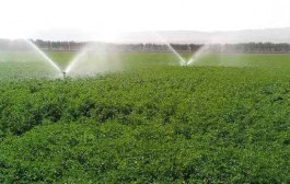 تخصیص آب به کل اراضی طرح ۵۵۰ هزار هکتاری خوزستان