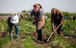 هشدار حافظی درباره آبیاری مزارع جنوب پایتخت با فاضلاب