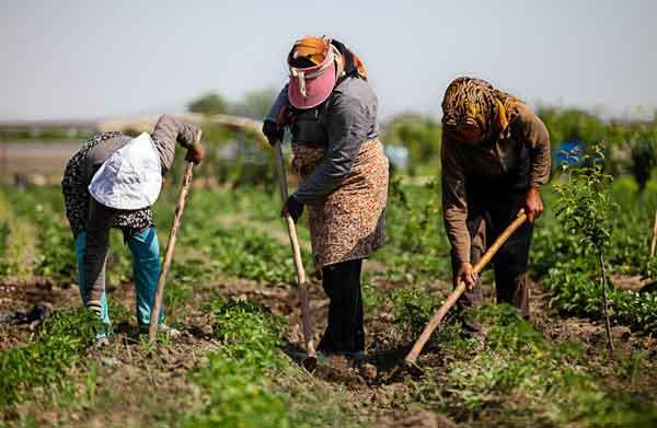 نگاهی به تلاشها برای مدیریت مصرف صحیح آب در بخش کشاورزی خراسان رضوی