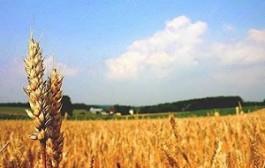 مدیریت و برنامه ریزی برای جلوگیری از هدر رفتن آب در کشاورزی