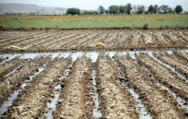 برنامه جدی وزارت بهداشت برای مزارعی که با فاضلاب آبیاری میشوند