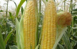 با توجه به کمبود آب، تولیدات کشاورزی از فضای باز به بسته منتقل شود
