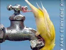 مشقت های ورود آب به استان بوشهر و بی توجهی به مدیریت مصرف