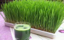 فواید آب سبزه گندم برای درمان اگزما و کاهش وزن