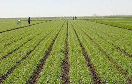 وقتی کشاورزی گوی سبقت مصرف آب را میرباید