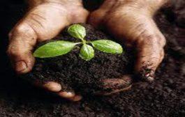 مسمومیت خاک و آب به کودهای جامد/۹۰ درصد کشاورزان از کودهای جامد استفاده میکنند