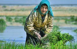 زندگی و دارایی کشاورزان هندیجانی به دلیل نبود آب در حال از بین رفتن است