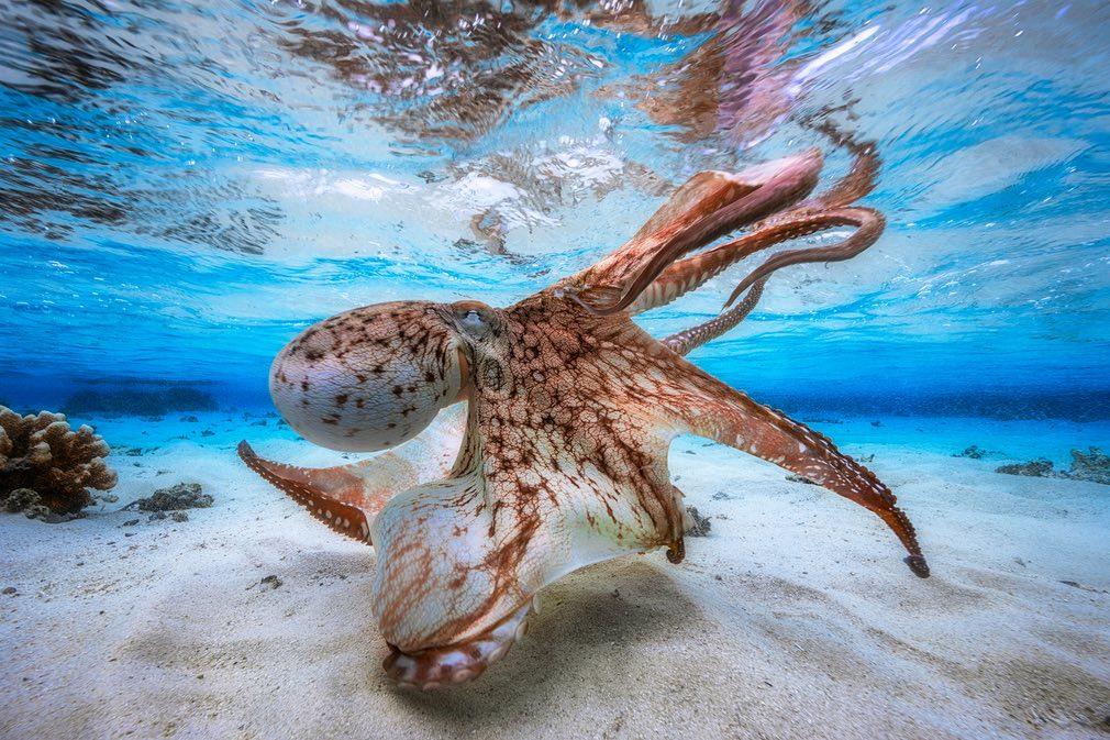 تصاویری شگفتآور از دنیای زیر آب در سال ۲۰۱۷