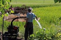 برخورد قاطع با برنجکاری در شهرستان