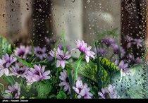 حجم بارندگی تمامی استانهای کشور سه رقمی شد/ لرستان پربارشترین و سیستانوبلوچستان کمبارشترین استانهای کشور