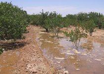 رفع تصرف ۷۰۰۰ متر مربع از حریم نهر