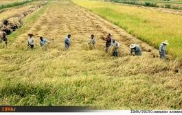 کشاورزی کرمان از بحران کم آبی عبور کرد