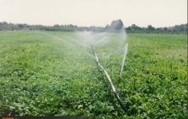 اجرای موفق طرح آبیاری قطرهای زیر سطحی مطبق اصلاح شد
