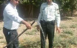 شش رشته انشعاب غیرمجاز آب در جوادآباد قطع و جمع آوری شد