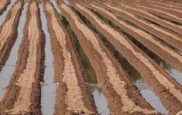 توسعه کشاورزی البرز در گرو تحول سیستم آبیاری