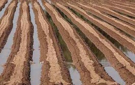 سالانه ۲۷ میلیارد مترمکعب آب توسط ضایعات کشاورزی هدر می رود