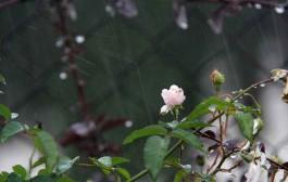 بارشهای کشور بالاتر از سال گذشته و میانگین بلندمدت
