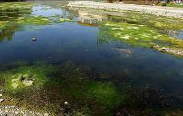 تقسیم نادرست آب علت اصلی نابودی تالابها است/۶۴ درصد تالابهای دنیا از ۱۹۹۰ نابود شدهاند