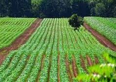 تهمانده آب کشور به کشاورزان میرسد