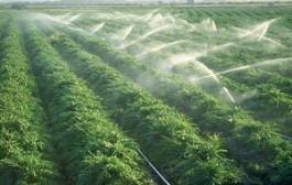 سبزی ایلامیها با آب آلوده آبیاری میشود